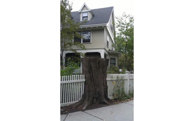 Tree stump in fence