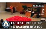 World Record Balloon Dog