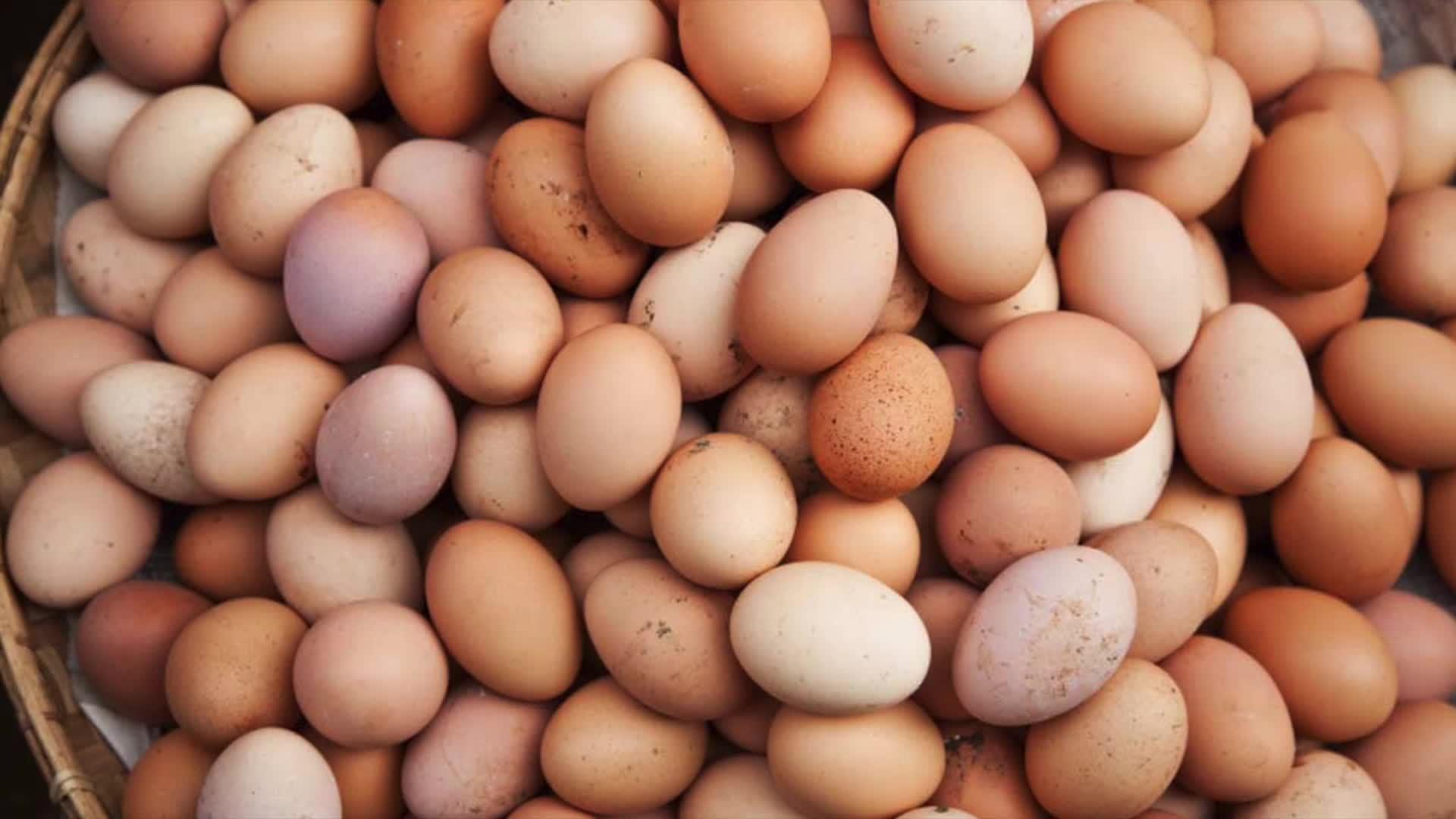 Egg Tower