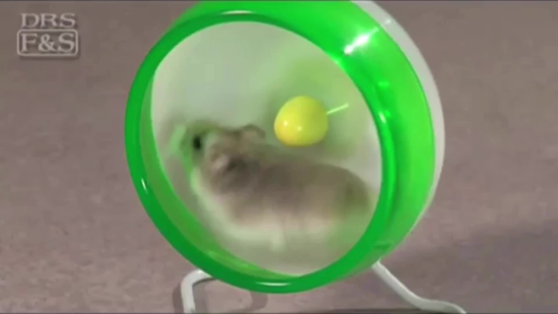 Hamster runs fast!