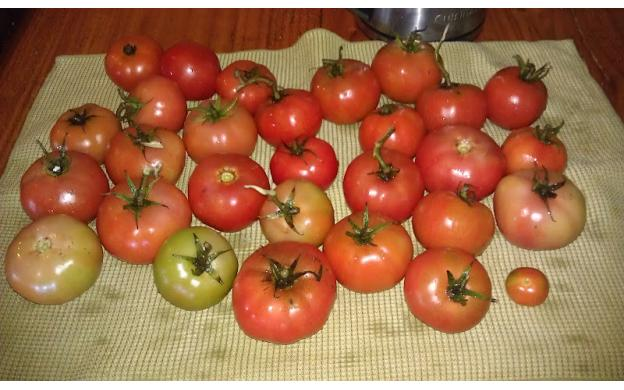 Tomatoes for ???