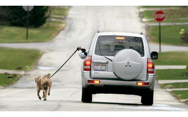Dog and Car / Car and Dog