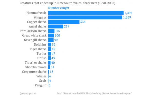 Animals caught in New South Whale Nets 1990-2008