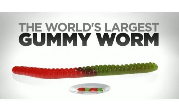 World Largest Gummy Worm
