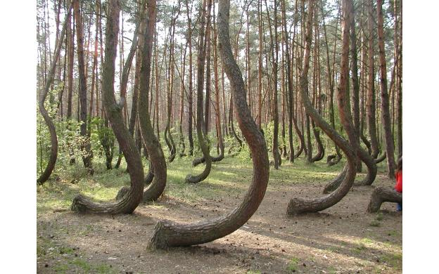 Bent Forest